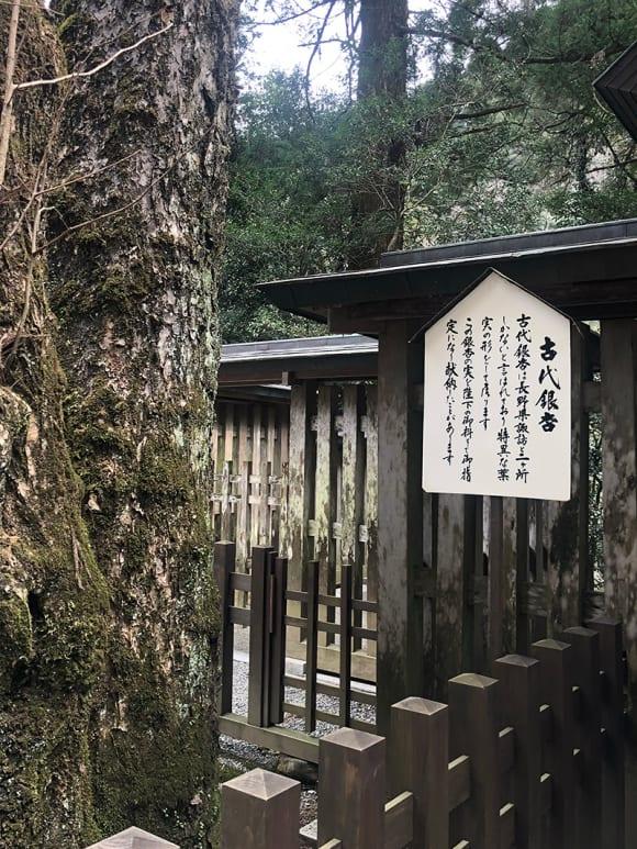 天岩戸神社の境内にそびえる御神木